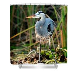 Great Blue Heron Shower Curtain by Matt Suess