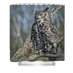 Shower Curtain featuring the photograph Great Horned Owl by Elaine Malott
