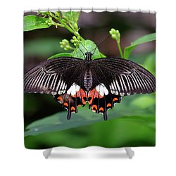 Great Mormon Butterfly Shower Curtain by Ronda Ryan