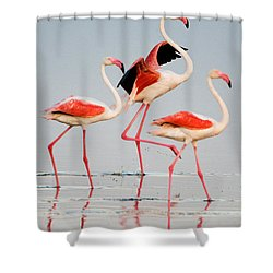 Greater Flamingos Phoenicopterus Roseus Shower Curtain