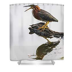 Green Heron Shower Curtain by Ricky L Jones