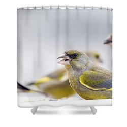 Greenfinches Shower Curtain