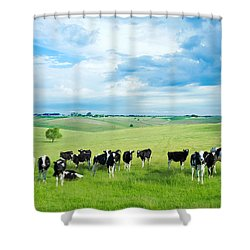 Happy Cows Shower Curtain by Todd Klassy