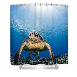 Hawaiian Turtle Shower Curtain