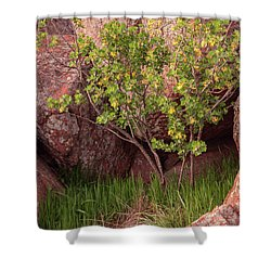 Shower Curtain featuring the photograph Hidden by Iris Greenwell