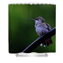 Hummingbird Portrait Shower Curtain by Ronda Ryan