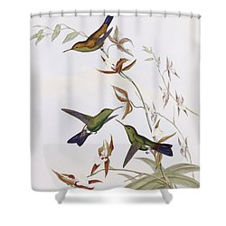Hummingbirds Shower Curtain by John Gould