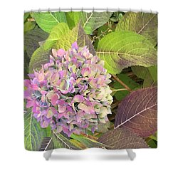 Hydrangea Shower Curtain by Kay Gilley