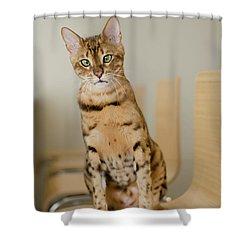2 Shower Curtain
