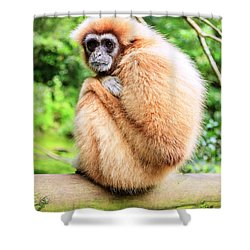 Shower Curtain featuring the photograph Lar Gibbon by Alexey Stiop