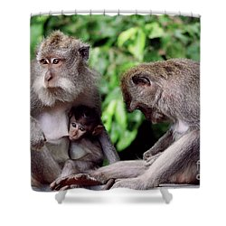 Long Tailed Macaques  Shower Curtain by Cassandra Buckley