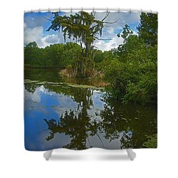 Louisiana  Bald Cypress Tree Shower Curtain