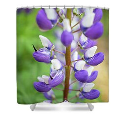 Shower Curtain featuring the photograph Lupine Blossom by Robert Clifford