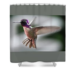 Male Anna's In Flight Shower Curtain by Jay Milo