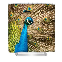 Shower Curtain featuring the photograph Male Indian Peacock by Joye Ardyn Durham