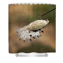 Shower Curtain featuring the photograph Milkweed Pod by Elsa Marie Santoro