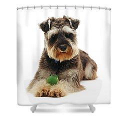 Miniature Schnauzer Shower Curtain by Jane Burton