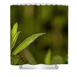 Tightrope Shower Curtain