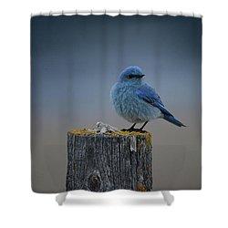 Mountain Bluebird 2 Shower Curtain