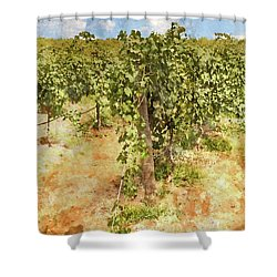 Napa Vineyard In The Spring Shower Curtain