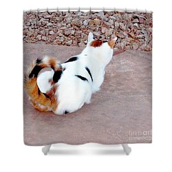 Silly Calico Kitty Shower Curtain