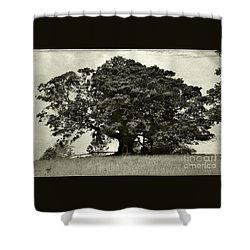 Old Fig Tree Shower Curtain by Kaye Menner