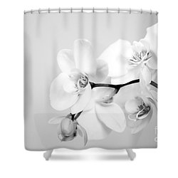 Orchid Shower Curtain by Amanda Barcon