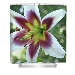 Shower Curtain featuring the photograph Oriental Lily by Rebecca Overton