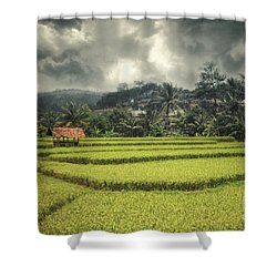 Shower Curtain featuring the photograph Paddy Field by Charuhas Images
