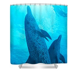 Pair Of Spotted Dolphins Shower Curtain by Ed Robinson - Printscapes