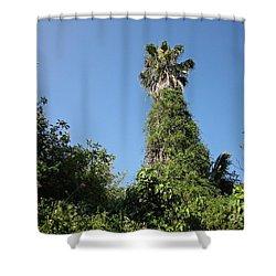 Palm Tree And Wilderness In Torremolinos Shower Curtain