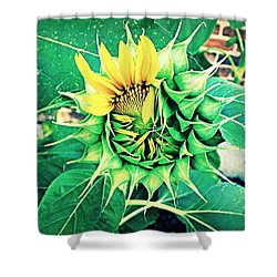 Peeping Sunflower Shower Curtain