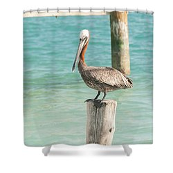 Pelican At Isla Mujeres Shower Curtain