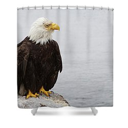 Shower Curtain featuring the photograph Perched Bald Eagle by Brandy Little