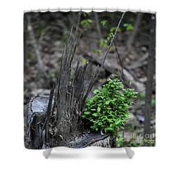Shower Curtain featuring the photograph Persistence by Skip Willits