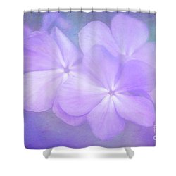Phlox In The Evening Light Shower Curtain