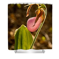 Pink Ladys Slipper 5 Shower Curtain