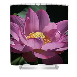 Pink Lotus Blossom Shower Curtain