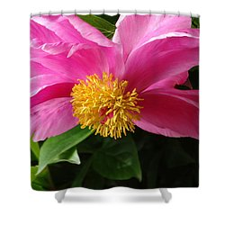 Shower Curtain featuring the photograph Pink Peony by Rebecca Overton