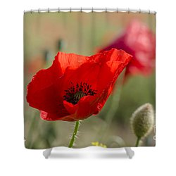 Poppies In Field In Spring Shower Curtain by Perry Van Munster