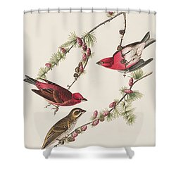 Purple Finch Shower Curtain by John James Audubon