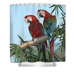 Red And Green Macaw Ara Chloroptera Shower Curtain by Konrad Wothe
