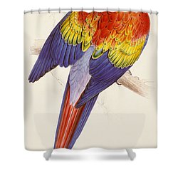 Red And Yellow Macaw Shower Curtain by Edward Lear