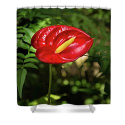 Red Anthurium Flower Shower Curtain by Hans Engbers