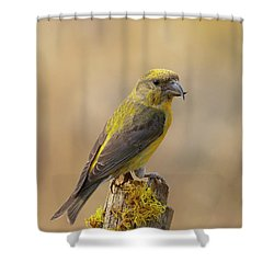 Red Crossbill Shower Curtain by Doug Herr