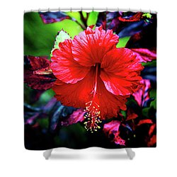 Red Hibiscus 2 Shower Curtain