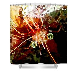 Red Night Shrimp Shower Curtain