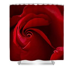 Red Rose Iv Shower Curtain