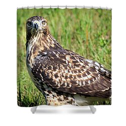 Red-tail Portrait Shower Curtain