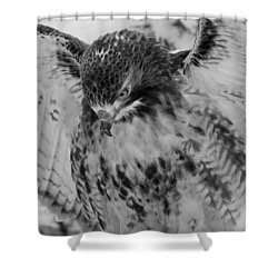 Red-tailed Hawk In Snow Shower Curtain
